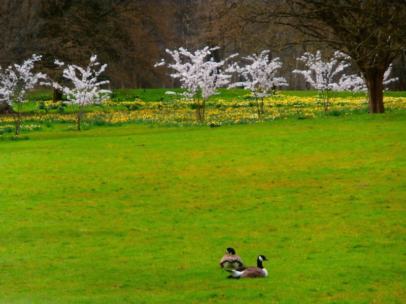 Spring at Chiddingstone Castle